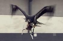 자연과 현대 문명의 싸움, '독수리의 불법 드론 사냥'