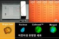 나노 크기 자성물질, 유방암 전이 세포 95% 잡아내