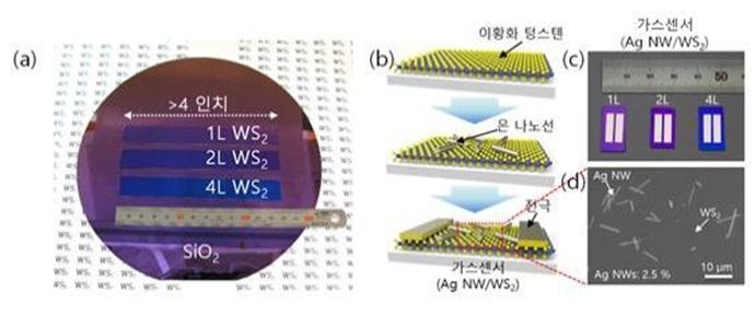 정밀도 12배 높아진 초고성능 가스 센서 개발