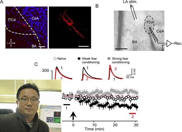 공포 기억 조절 신경 메커니즘 국내 연구진 세계 최초 규명