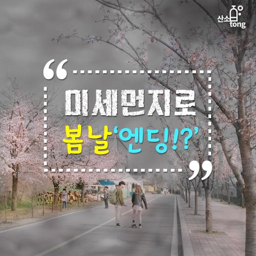 [카드뉴스] 미세먼지로 봄날'엔딩!?'
