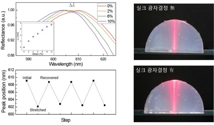 [Technical News]한국연구재단, 실크 단백질로 광학 인공생체조직 최초 개발 - 다아라매거진 기술뉴스