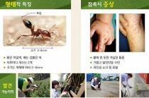 독개미(일명 붉은 불개미) 호주와 일본서 발견, 전국 검역 강화