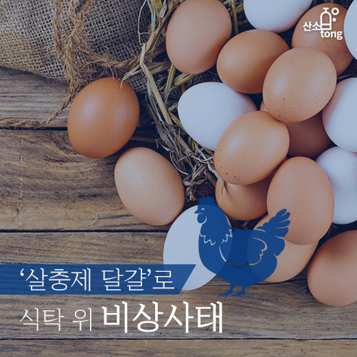 [카드뉴스] '살충제 달걀'로 식탁 위 비상사태