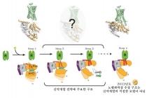 의약품 수용체의 신호전달 과정 규명