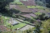 과테말라 스마트팜, 비용 문제로 대기업 위주로 운영